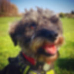 Dog walker in Finchley