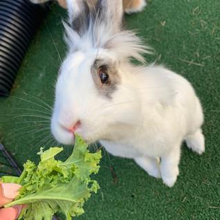 rabbit care finchley