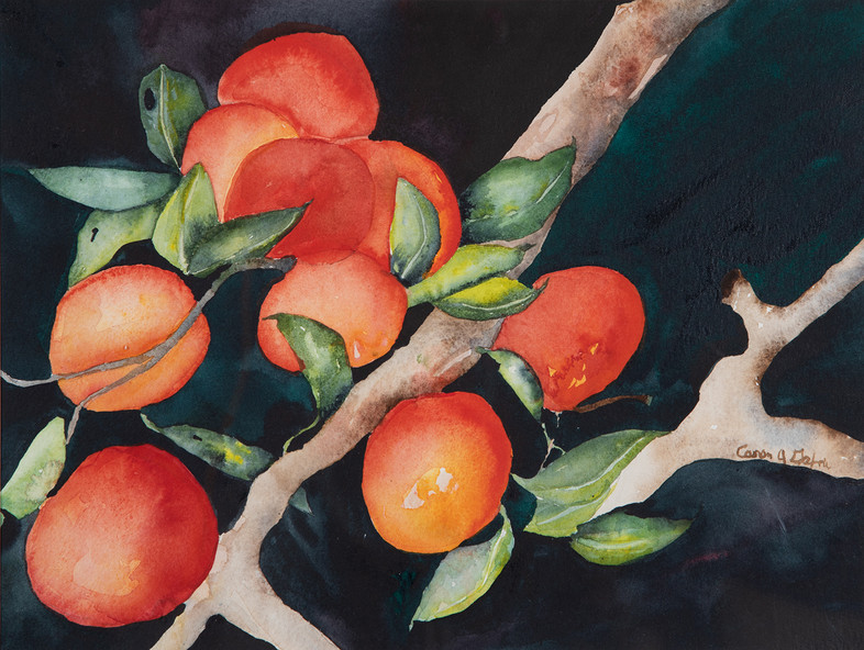 Fruit of the Night