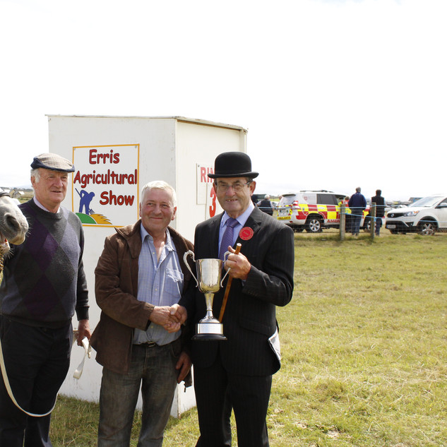 Champion Connemara of Show