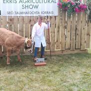 Cattle - Young Handler Erris