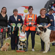 Dogs - Champion
