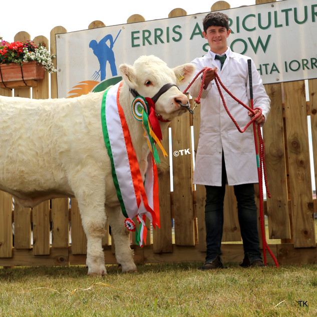 Charolais Champion and overall Champion