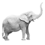 Elephant_edited.png