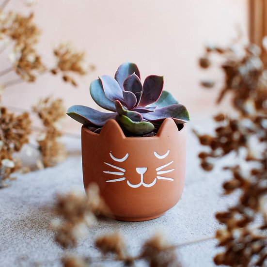 Cats Whiskers Terracotta Planter Pot