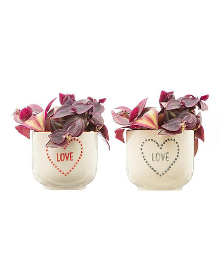 cute Mini Love Heart Set of Indoor Planters (Small Succulent Plant Pots) In Red and Grey. Fun Couples gift