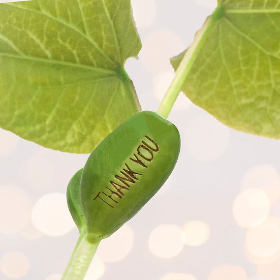 unusual blank greetings card with 'thanks a bunch' with magical growing bean that says thank you when grown