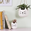 Cute Mini Cat Face White Indoor Planter Pot (Small Succulent Plant Pot). White pot with black whiskers and sticky out ears.