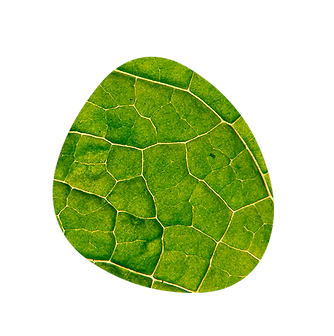 les plantes adaptogenes inners aident le corps a se reequilibrer