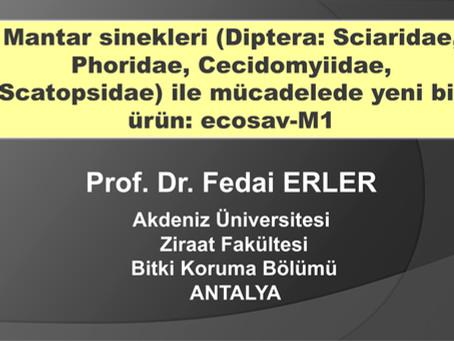 Prof. Dr. Fedai ERLER: Mantar Sinekleri