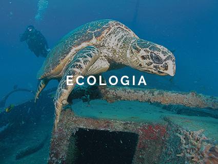 Ecologia em Porto de Galinhas