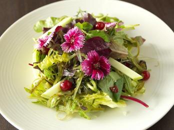Salmontini_Seaweed-Salad-low-res-1024x76