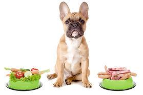 Buena-comida-para-perros-1024x678.jpg