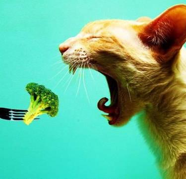 Dieta-Barf-para-gatos.jpg