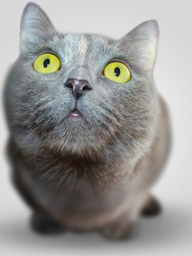 cat-animal-eyes-grey-54632.jpeg
