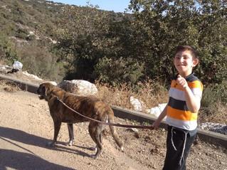 כלבנות טיפולית - צהר לטוהר רכסים