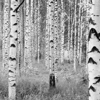 xxl4-023_woods_ma.jpg