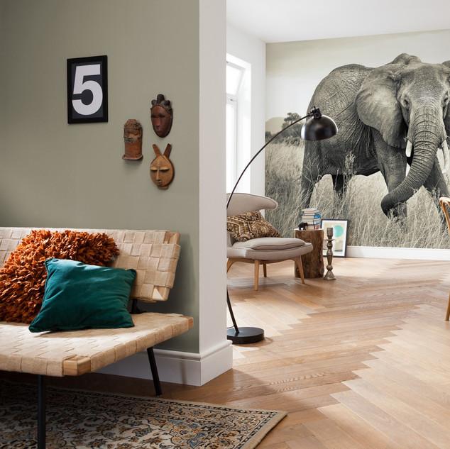 xxl4-529_elephant_interieur_ia.jpg