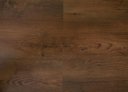 european-chestnut-sahara.jpg