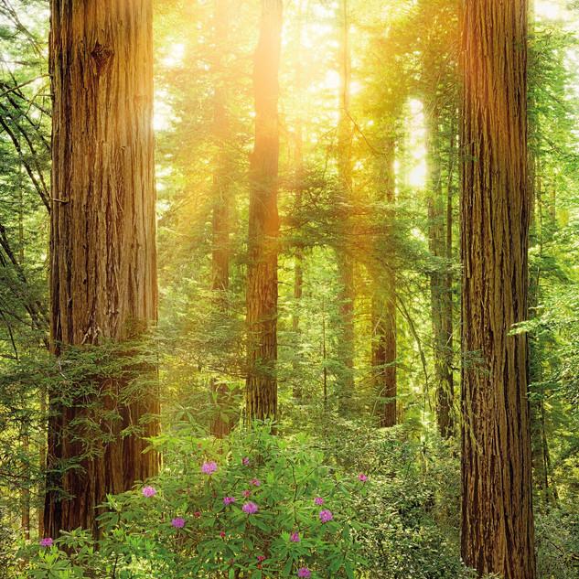 xxl2-044_redwood_m_ma.jpg