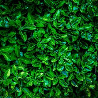Georgia Foliage