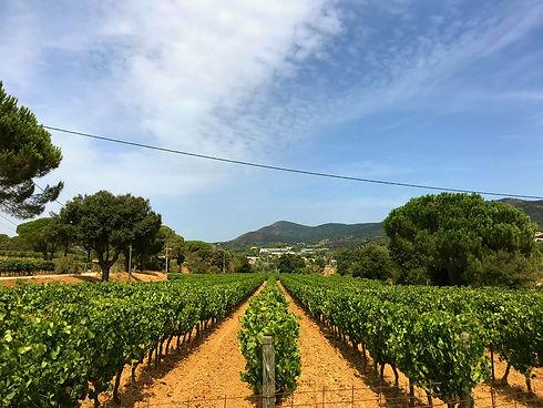 Domaine Le Clos Sainte Maxime, découvrez notre domaine viticole à Sainte Maxime, Var, Golfe de Saint Tropez. Producteur viticole de vin rouge et rosé à Ste Maxime, 83, Var, Golfe de Saint Tropez
