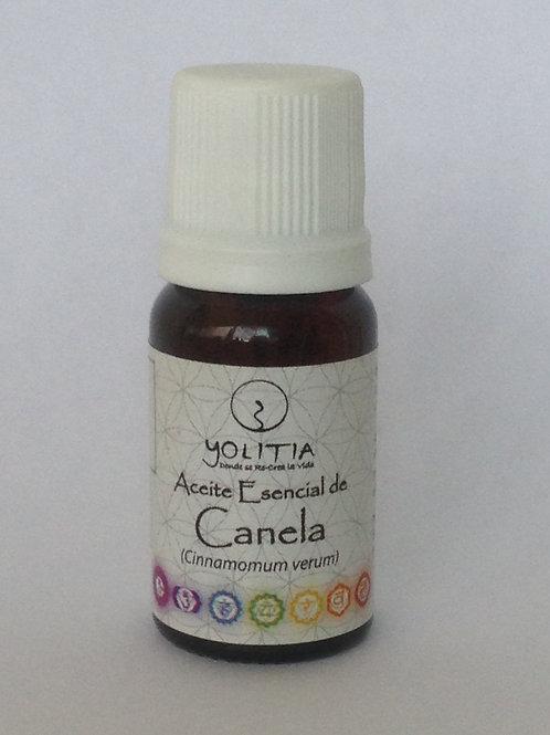 Aceite esencial de Canela (Cinnamomum verum)