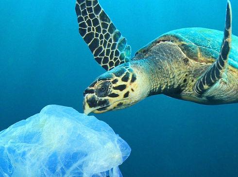 Plastic Polluted Ocean_edited_edited_edited.jpg