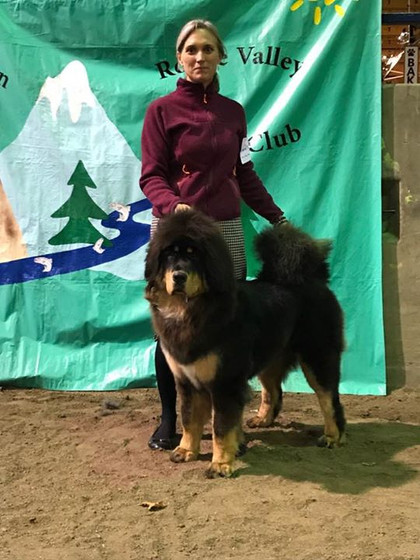 The young ladies take Best of Breed at Rogue Valley KC😁