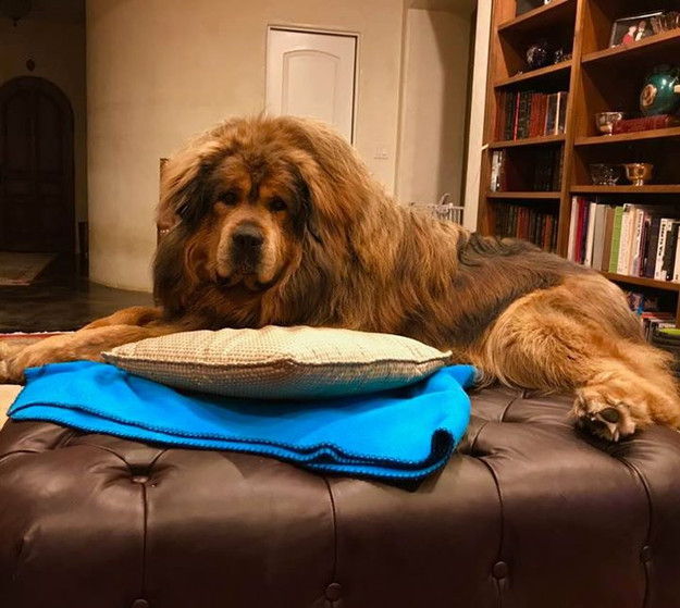 So excited when Monday, the new ottoman that Lois ordered two months ago finally arrived.jpg