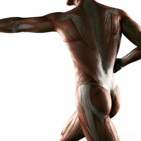 O que você acha sobre o uso de esteroides anabolizantes?