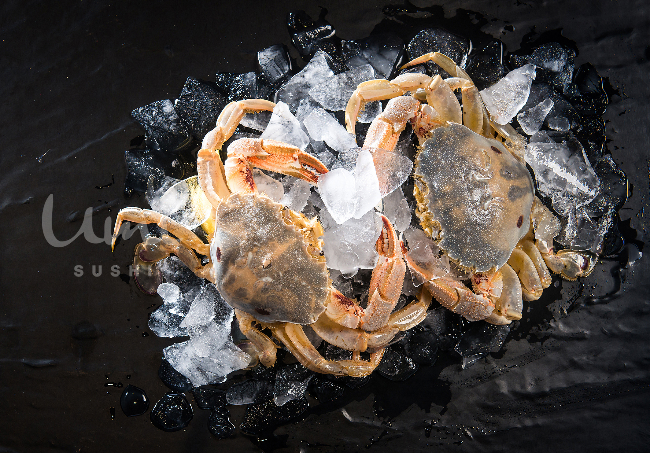 Live Baby Crab