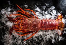 Live Tasmanian Lobster