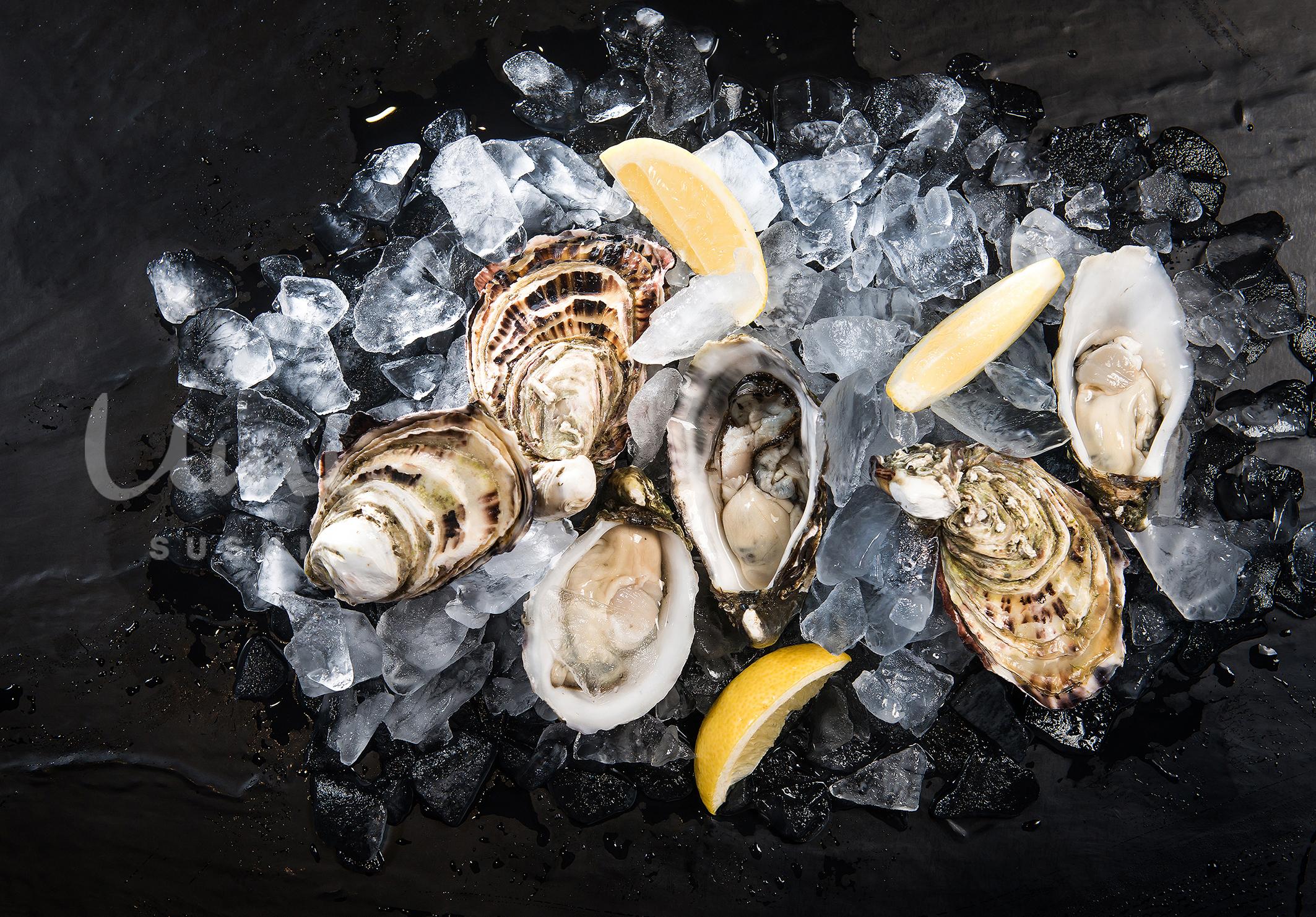 Fresh Jumbo Oyster