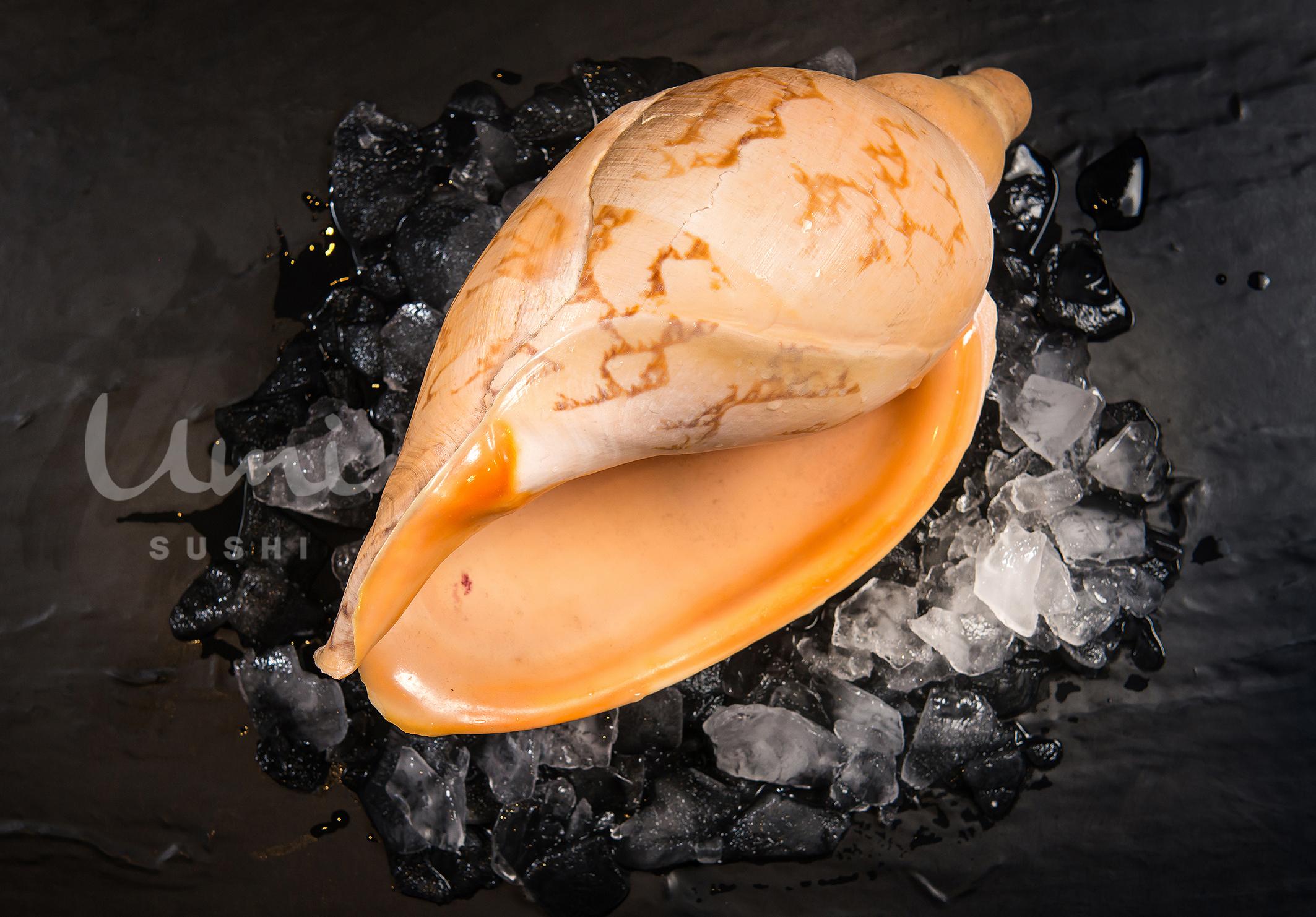 Sea Whelk