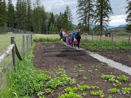 Local Farm Field Trip