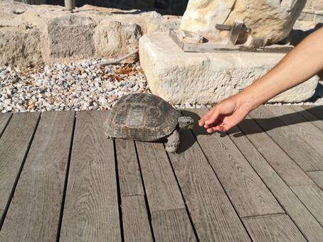 Schildkröte im Museum