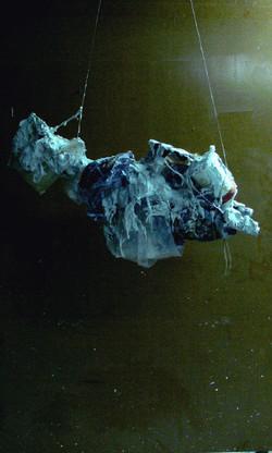 fish2008-1