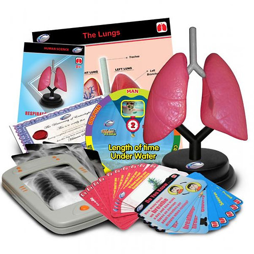 Juego Sistema Respiratorio de Lujo 8a+