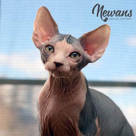 Newans Pic 2.jpg