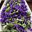 Thumbnail: violet + organic rose solar infusion foot soak