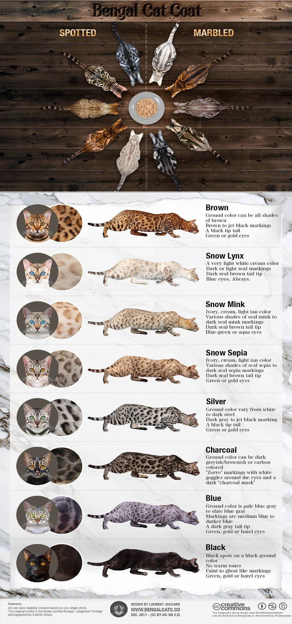 bengal-cat-colors-patterns-coat-infograp