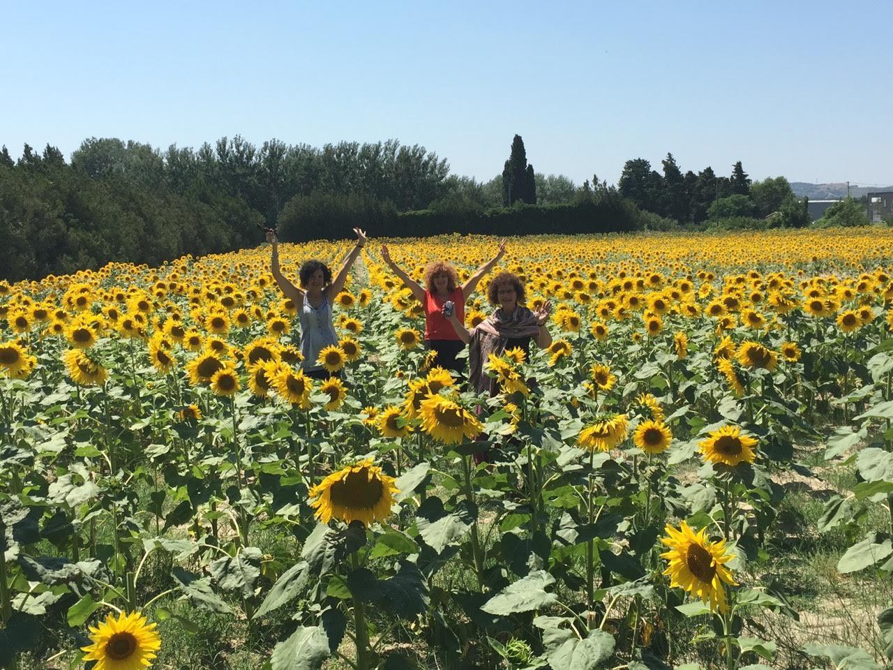 Nicole Sunflowers