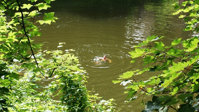 Wild Swimming Redbrook Wales