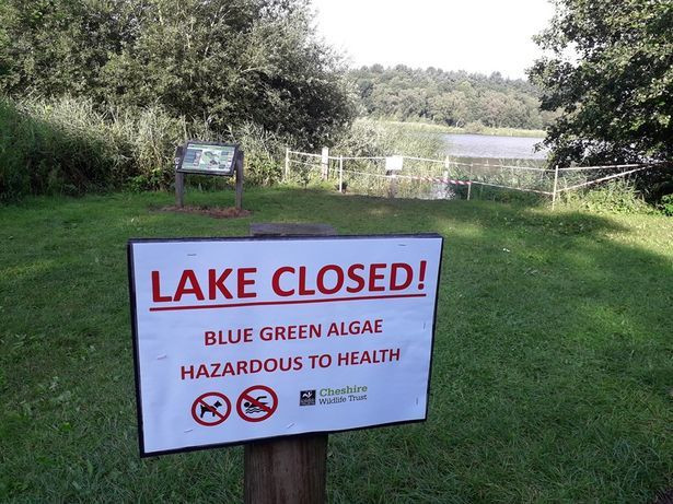 Hatchmere lake closed to swimmers