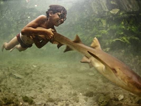 Wild Swimming Picture of the Week: Boy Swims with Pet Shark