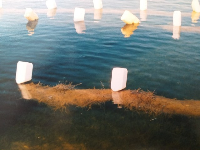 Cotswold Water Park Childrens Bathing Beach algae prevention