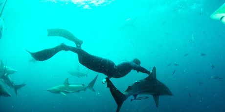 Wild Swimmers; if you see a shark – DON'T PANIC!