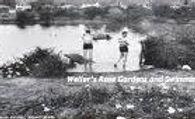 Leatherhead River Mole. Historic wild sw