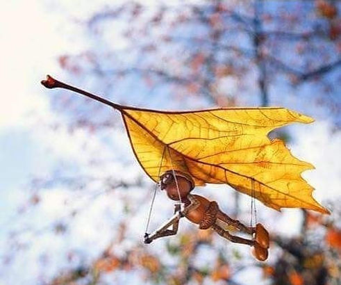 Little Acorn man hang glides from a leaf